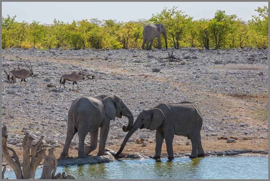 Elefanter a