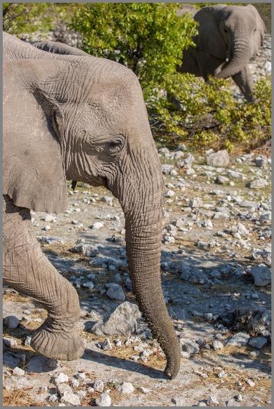 Elefanter b