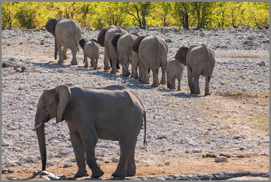 Elefanter c