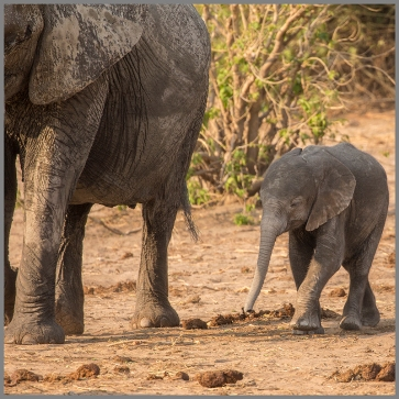 Elefanter e