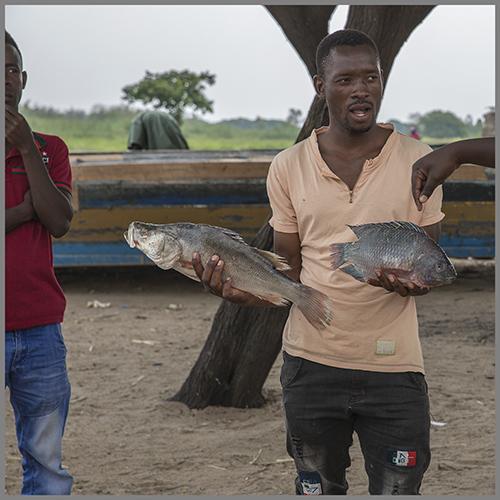 fiske c