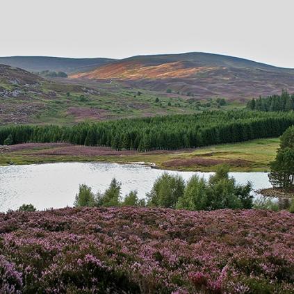 Skottland 2005 022