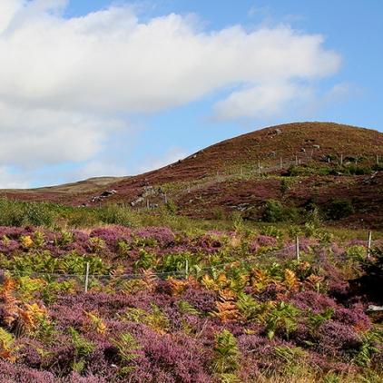 Skottland 2005 028